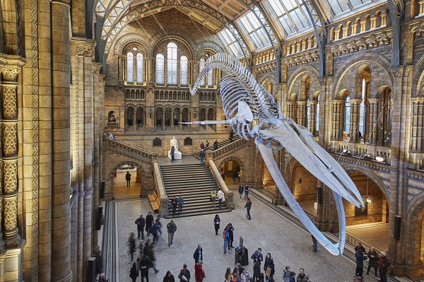 Un pop-up cinéma au Natural history Museum